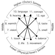 12 Senses