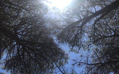 Trees & Sun